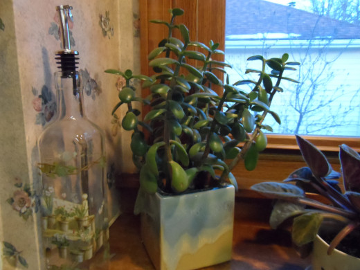 Jade plant, painted pottery planter and glass bottle.