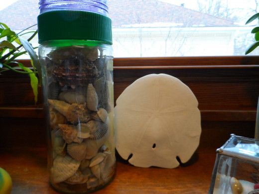 Large Sand dollar and glass container filled with seashells.