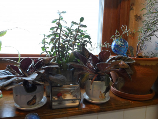 Spring, summer theme with beach and jade plants. two african violets.