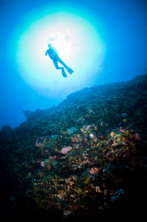 Alor, Eastern Indonesia: Underwater Heaven...