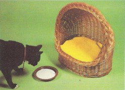 Basket Weaving - How to Weave a Pet Basket
