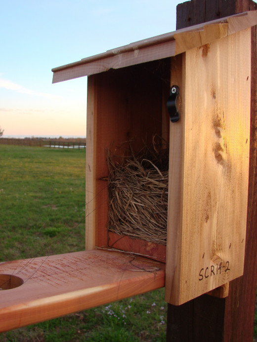 Nest Box opened for monitoring the nest. Note nest made of woven grasses and horse hair.