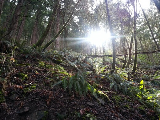 The spring sun peering through trees in the forest.