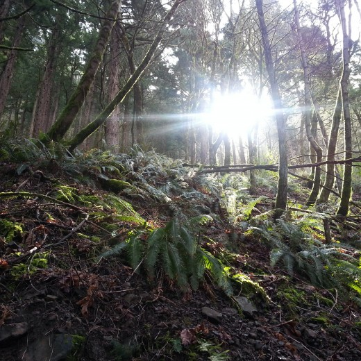 Another shot of the sun peering through the wooded forest.