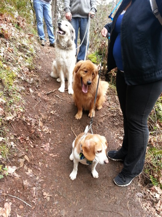Three dogs on the trail.