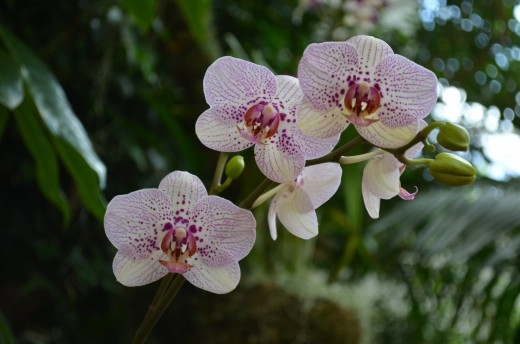 Beautiful white and purple orchids.