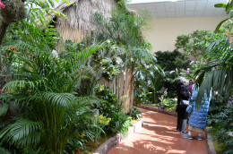 So many people come to enjoy the beauty of the orchids at these orchid shows.  I can't blame them, and I am one of them!