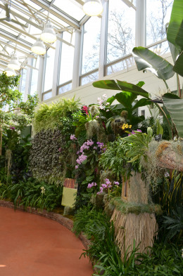 Amazing displays of orchids.  I am always amazed at the incredible job the team does that makes this show happen.