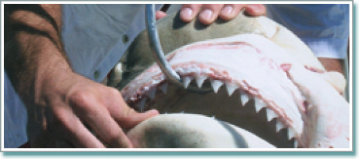 Catch a monster shark in Naples!