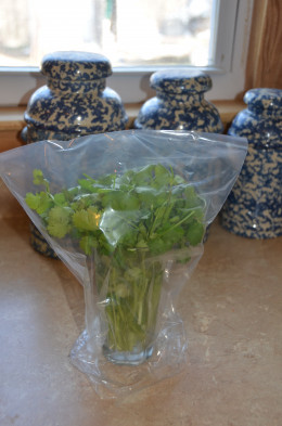 Fresh cilantro can be placed in water, covered with a plastic bag, and stored in the refrigerator.