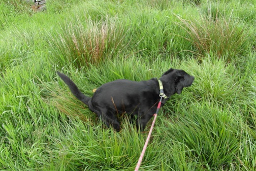 Housebreaking success - the dog poo crouch