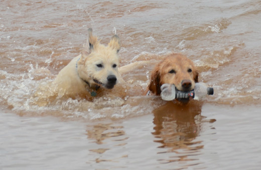 Dogs Having Fun