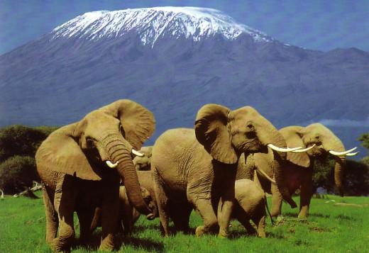 Kenya. The Origin of the Name Kenya