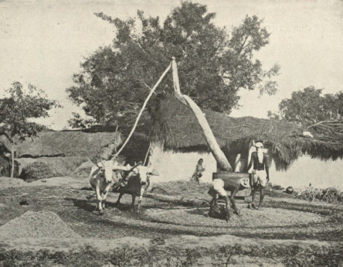 Sugar cane press at work in India in 1905, a few years before the birth of the oldest marathon runner, who was born into farming in Punjab in 1911.