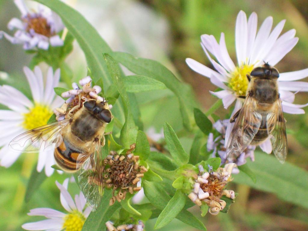 30 Flowers in a Bee Friendly Garden