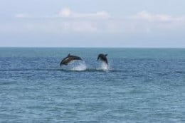 Dolphins out in CardiganBbay.