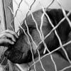 Solutions to Unwanted Dogs in Shelters