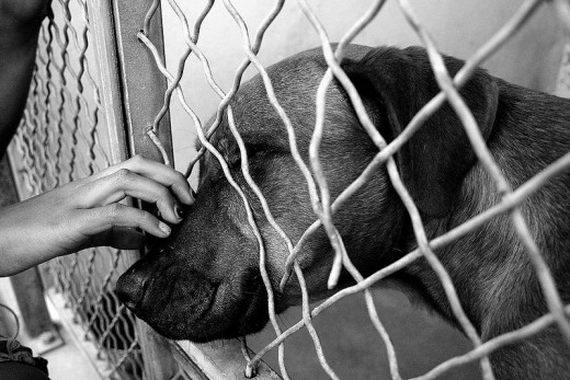 Most dogs in shelters got there through no fault of their own, and will be wonderful pets if someone gives them a chance before they're euthanized.