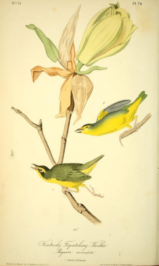 From the book Birds of America J.J. Audubon