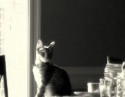 Sable Grey Shadow