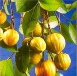 Super Fruit- Garcinia Cambogia