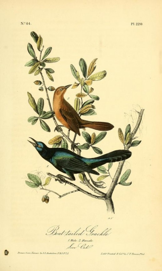 Birds of America-John James Audubon