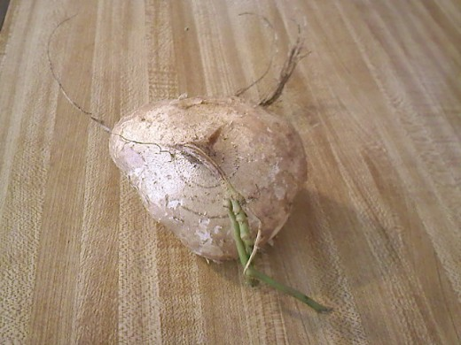 Andlook! The wife even, gave me a free turnip as a thank you since she needed change and I have lots of change in my bag.