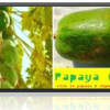 Papaya: Nutritional Properties & Health Benefits