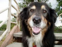 Why You Should Adopt a Senior Dog