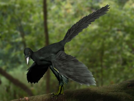 An artist's reconstruction of Archaeopteryx, generally believed to be the transitional fossil between dinosaurs and birds.