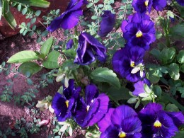 colors of beauty