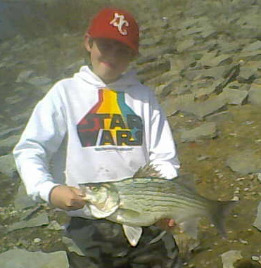 Big Hybrid Striped Bass Like This One Put Up An Absolute Brawl of a Fight