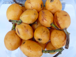 Loquat Tropical Fruit