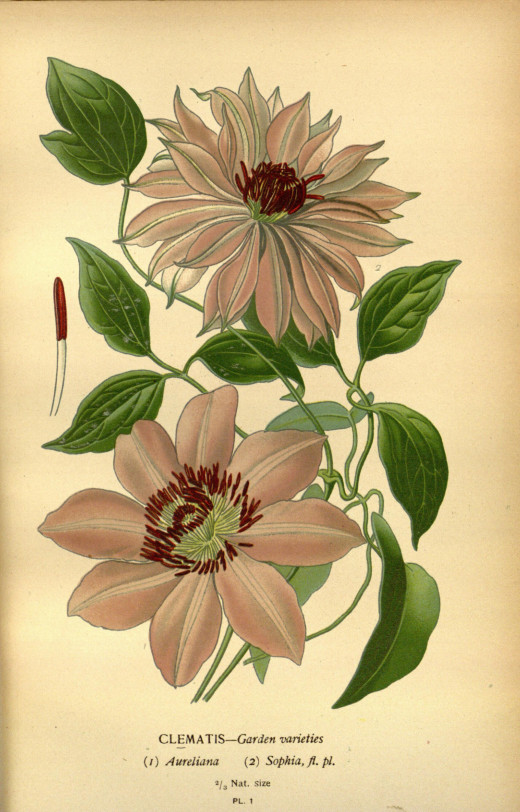 Favourite flowers of garden and greenhouse {1896-1897}