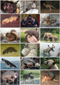 A Basic Guide To Mammals