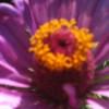 RosesProse profile image
