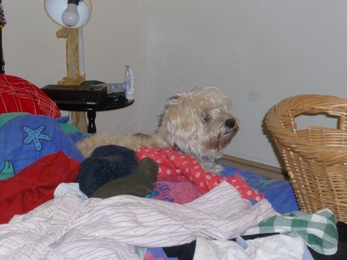 Nellie finds a pile of washing and our bed!