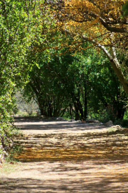 The Traveling Path