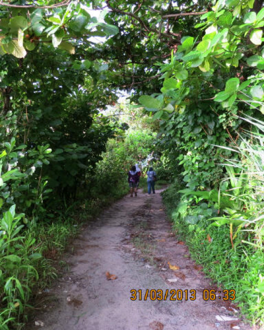 Mangrove forest, an attraction for tourism.
