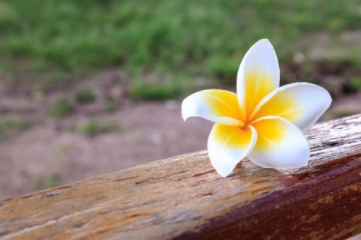 Start with a white flower for this science fair experiment