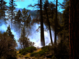 The fire was stopped before the winds could spread it to surrounding communities and camps.