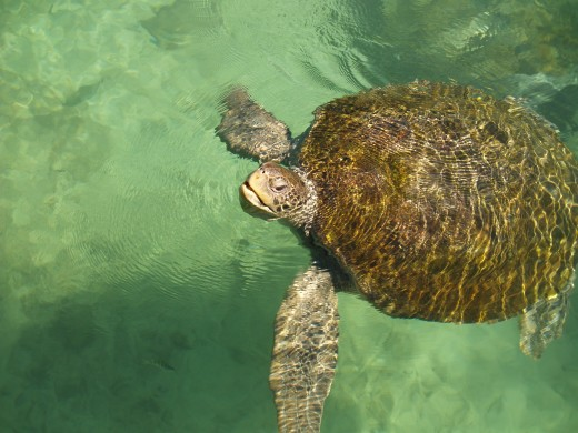 The amazing sea turtles at XCaret.  The sound they make when coming up for air is amazing