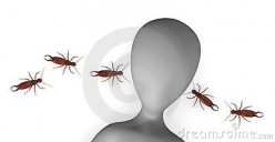Earwig Myths and Facts.