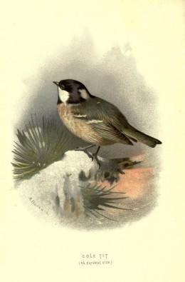Familar wild birds {1883}