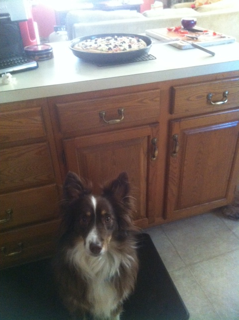 While the pizza is cooling, make sure you have a faithful watch dog stand guard.