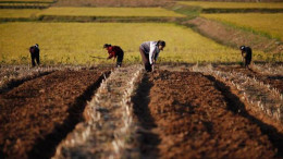 Farmers tend their fields in North Korea. Poor agricultural output has plagued the country from the beginning.