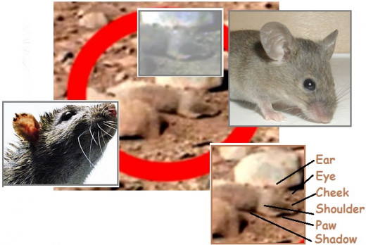Stowaway's aboard Annunaki space shuttles from Earth to Mars have provided Mars with a rodent problem.