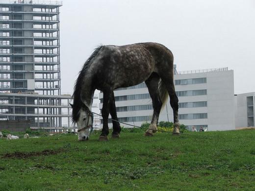An abandoned horse in Dublin