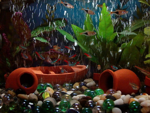 Having the right equipment is the first step to a successful freshwater aquarium.
