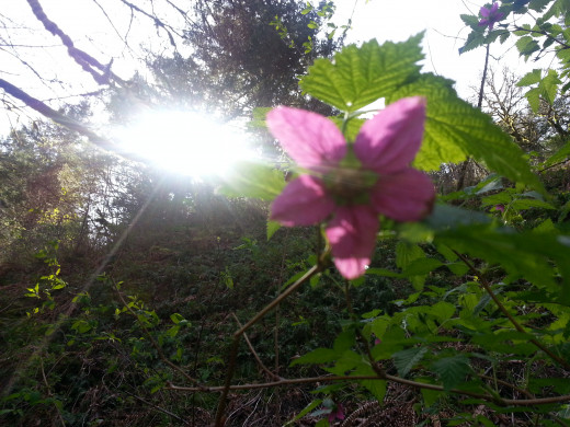 The sun peering over a flower.